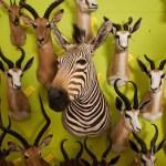 Wildlife trophies