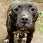 Dog rescued from dogfighting
