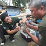 Vaccinating a puppy