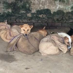 Nagaland dog meat trade