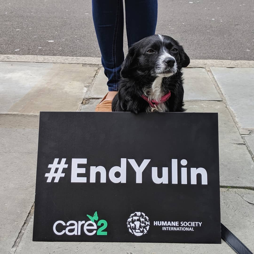 Dogs saved from China's Yulin dog meat festival join MP ...