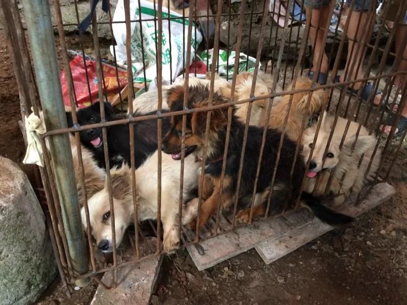Yulin Dog Meat Festival 2020.China Archives Humane Society International