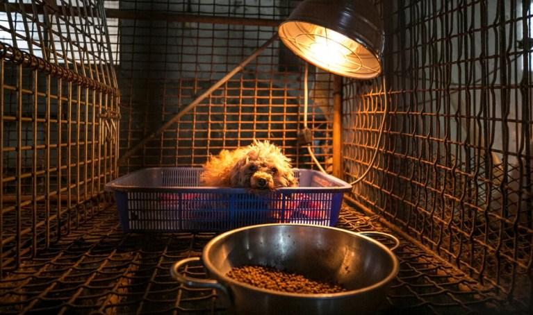 Dog at a dog meat farm