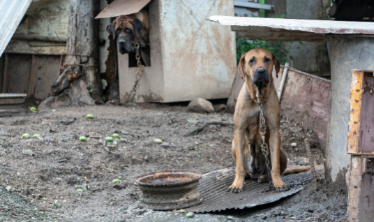 South Korean dog meat farm