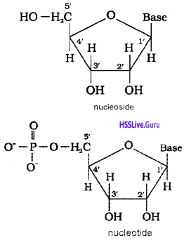 Plus Two Chemistry Chapter Wise Questions and Answers Chapter 14 Biomolecules ncert mark q5 img 8
