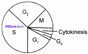 Plus One Botany Chapter Wise Questions and Answers Chapter 6 Cell Cycle and Cell Division img1