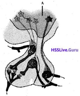 Kerala SSLC Biology Model Question Paper 3 English Medium - 13