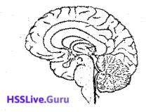 Kerala SSLC Biology Previous Year Question Paper March 2019 English Medium - 14