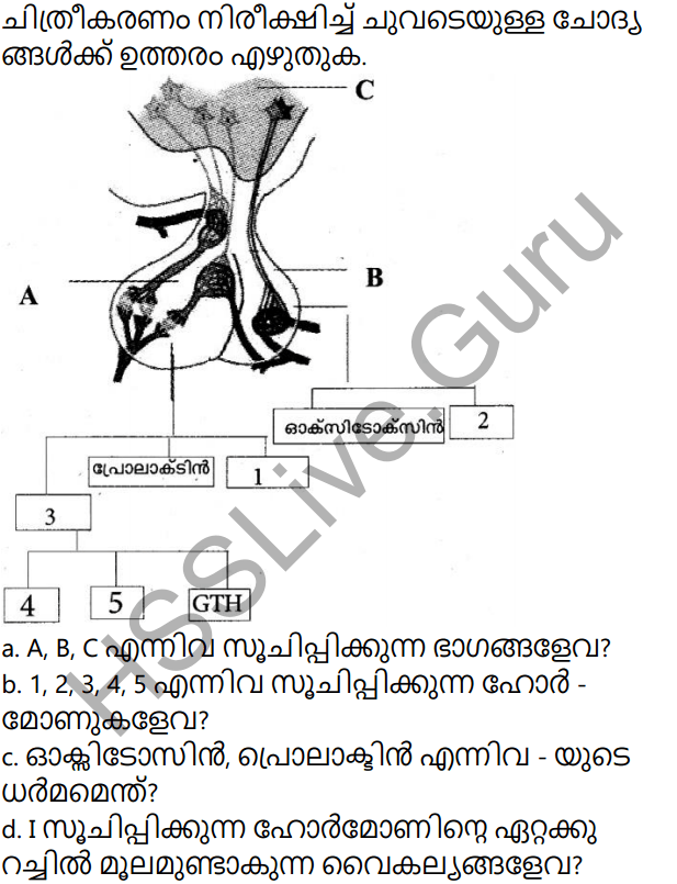 Kerala Syllabus 10th Standard Biology Solutions Chapter 3 Chemical Messages for Homeostasis in Malayalam 44