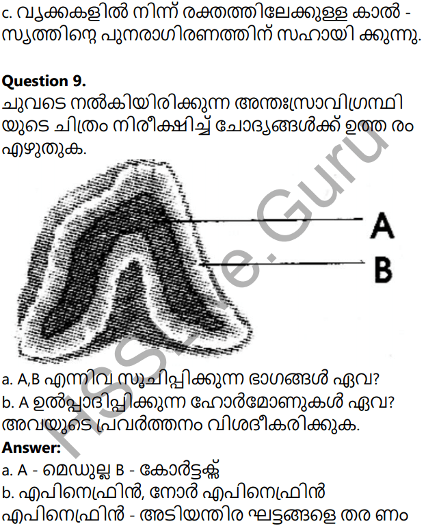 Kerala Syllabus 10th Standard Biology Solutions Chapter 3 Chemical Messages for Homeostasis in Malayalam 56
