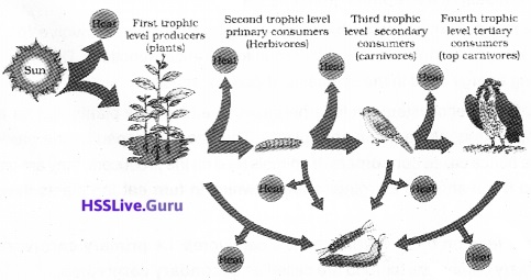 Plus Two Botany Notes Chapter 7 Ecosystem 5
