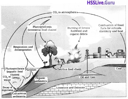 Plus Two Botany Notes Chapter 7 Ecosystem 8