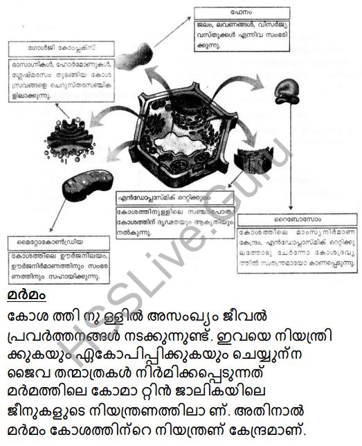 Kerala Syllabus 8th Standard Basic Science Solutions