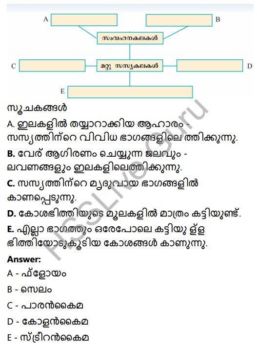 Kerala Syllabus 8th Standard Basic Science Solutions Chapter 2 Cell Clusters in Malayalam 31