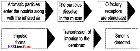 Kerala Syllabus 10th Standard Biology Solutions Chapter 2 Windows of Knowledge - 54