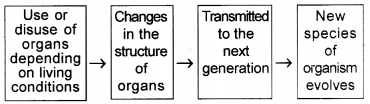 Kerala Syllabus 10th Standard Biology Solutions Chapter 8 The Paths Traversed by Life - 12
