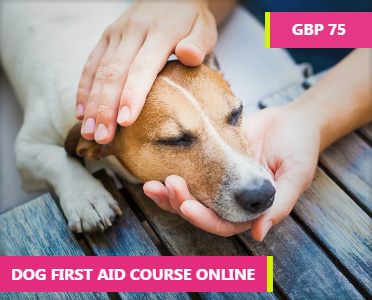 Dog First Aid Course Online - dog cpr course - cpr and first aid for dogs - Pet First Aid Course