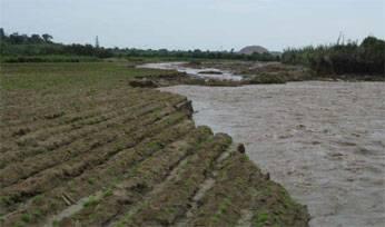 Desborde afectó 150 hectáreas áreas de cultivo