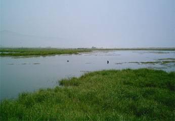 Humedal  Santa Rosa de Chancay