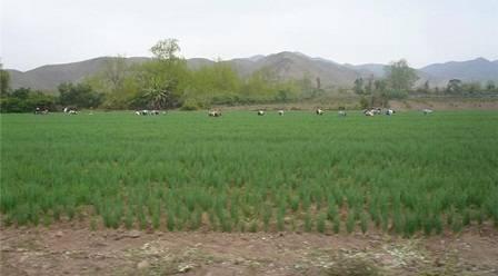 Campos de cultivo.