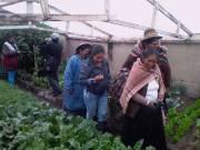 Foncodes amplía inversión para incorporar a nuevas familias en proyectos productivos de Puno