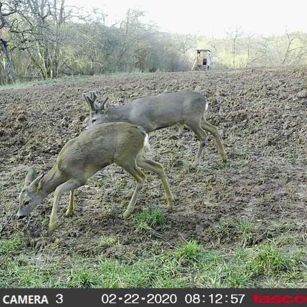 Tasco kamera Trail Tan 8MP
