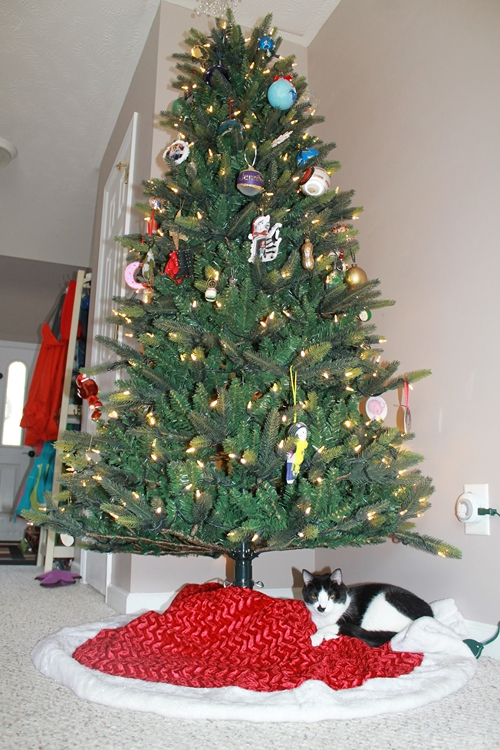 2013-12-05catundertree