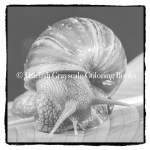 Downloadable Grayscale Coloring Page Snail From Beautiful Creatures
