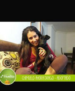 Chimuelo_006
