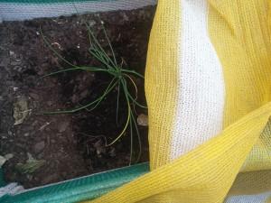 malla para plantas