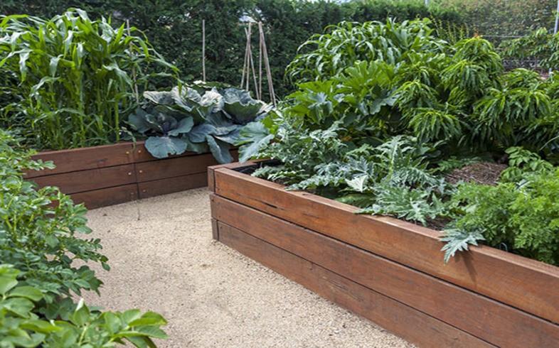 cajoneras para cultivo de hortalizas