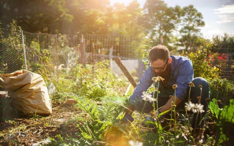 hortalizas y frutas en verano