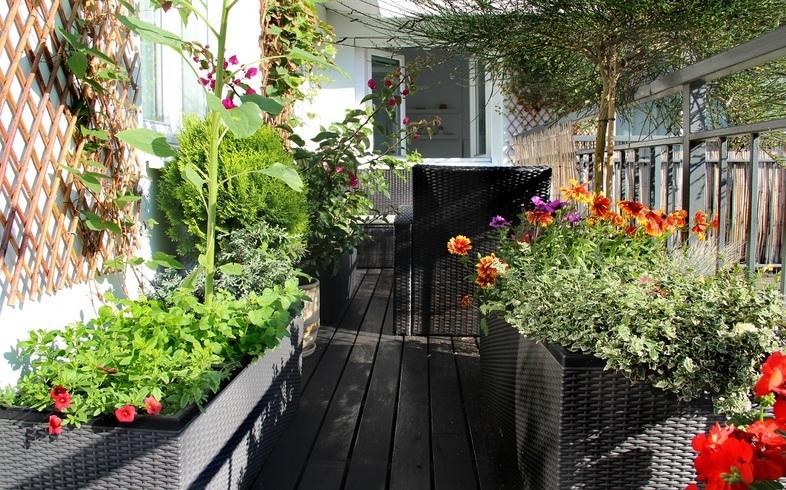 huerto en terraza o balcon
