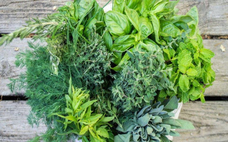cultivo plantas aromaticas