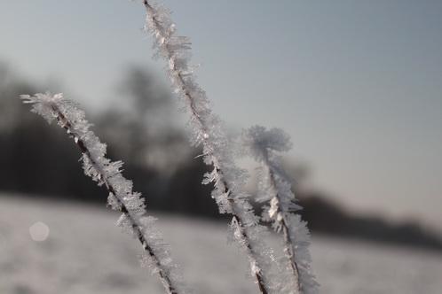 Noch eine Schneeblume 0069