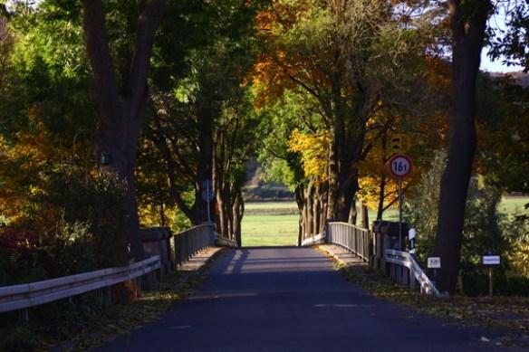 Herbstlicher Blick auf die Brücke 2642