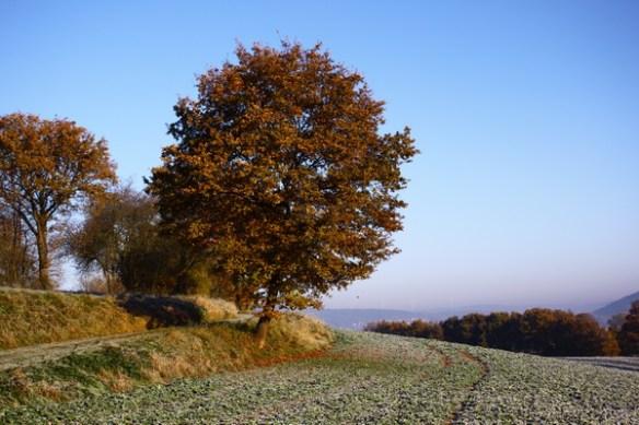 Kalt im Herbst 2760