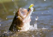 bass-Louisiana