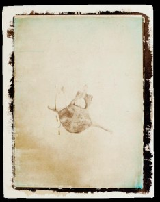 Registros - Hugo Curti