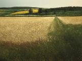 """<h5>Chemin en Été</h5><p>Oil on canvas, 59 x 78 ¾"""" (150 x 200cm)</p>"""