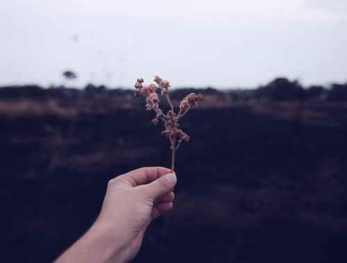 Qual o sentido desse acaso chamado Vida hugo ribas