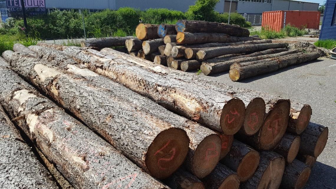 Van naaldhout tot hardhout