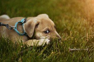 Kleien puppie in het gras