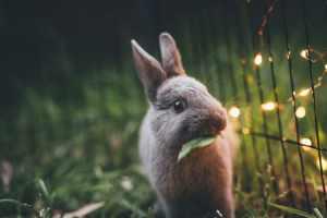 konijntje eet een blaadje