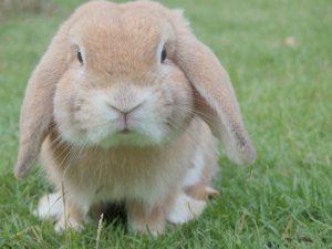beige konijn in een grasveldje