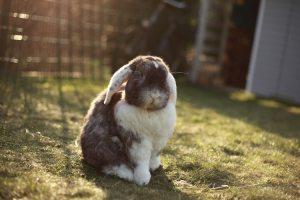 Mooi konijntje in zonnige tuin