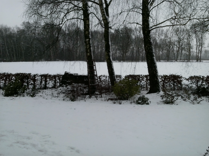 Sneeuw, 24 januari 2015