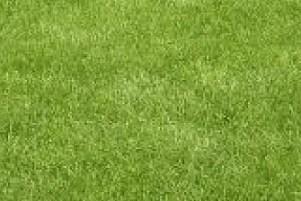 echt gras