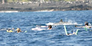 4045737_web1_Swimming-With-Dolphin_Chri
