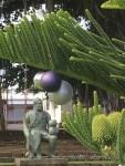 ハワイ島フォト日記 南国で観た「これが本当のXmasツリーの木か!」
